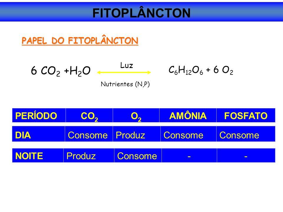 PAPEL DO FITOPLÂNCTON 6 CO 2 +H 2 O C 6 H 12 O 6 + 6 O 2 Luz Nutrientes (N,P) PERÍODOCO 2 O2O2 AMÔNIAFOSFATO DIAConsomeProduzConsome NOITEProduzConsome-- FITOPLÂNCTON