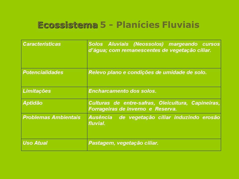 Ecossistema Ecossistema 5 - Planícies Fluviais