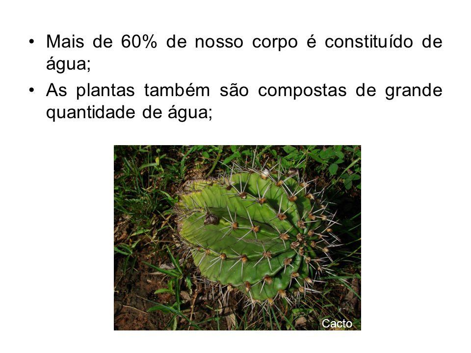 Mais de 60% de nosso corpo é constituído de água; As plantas também são compostas de grande quantidade de água; Cacto