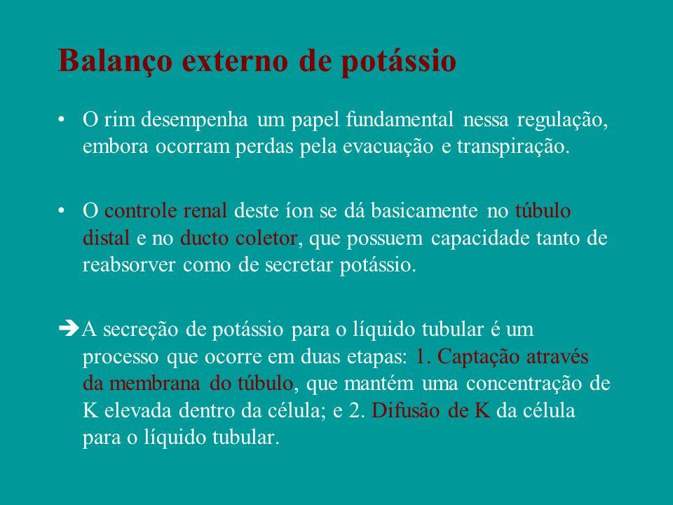 Balanço externo de potássio O rim desempenha um papel fundamental nessa regulação, embora ocorram perdas pela evacuação e transpiração. O controle ren