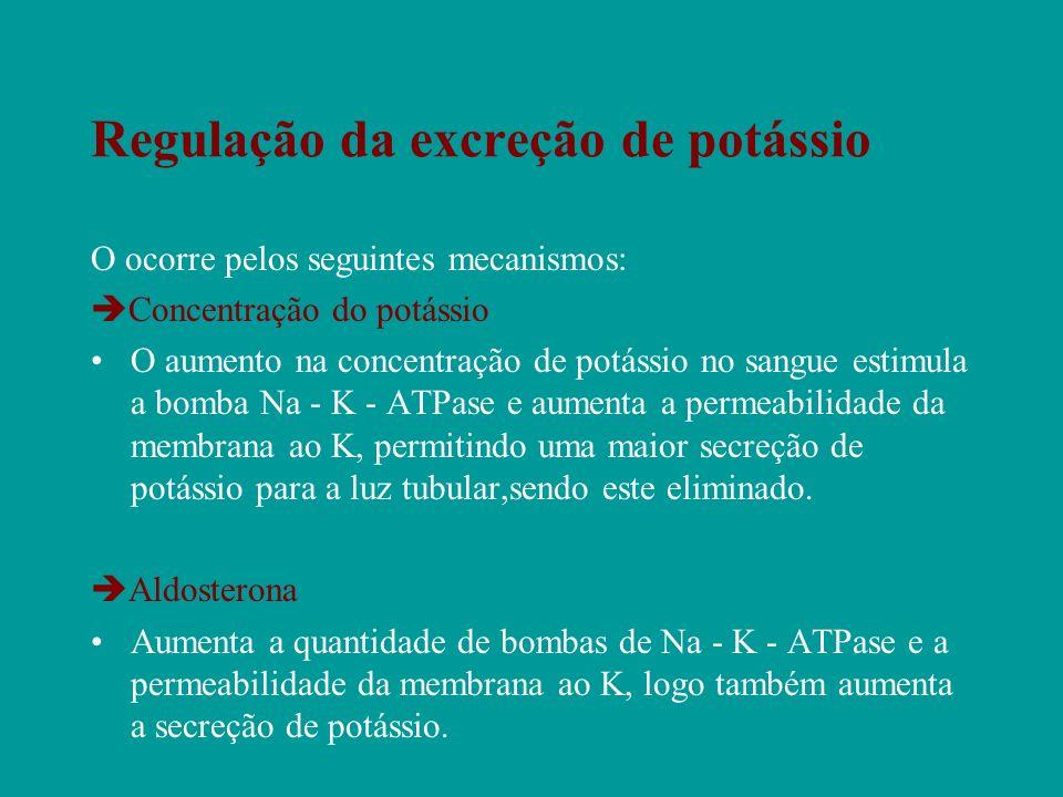 Regulação da excreção de potássio O ocorre pelos seguintes mecanismos: Concentração do potássio O aumento na concentração de potássio no sangue estimu