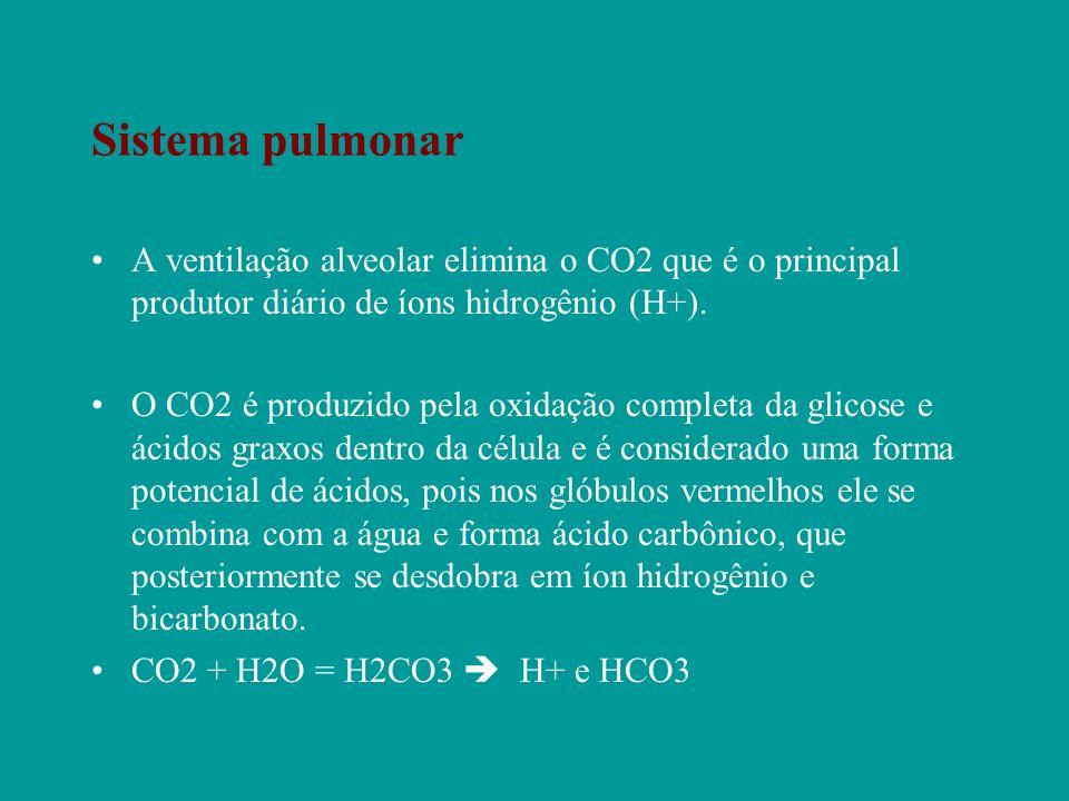 Sistema pulmonar A ventilação alveolar elimina o CO2 que é o principal produtor diário de íons hidrogênio (H+). O CO2 é produzido pela oxidação comple