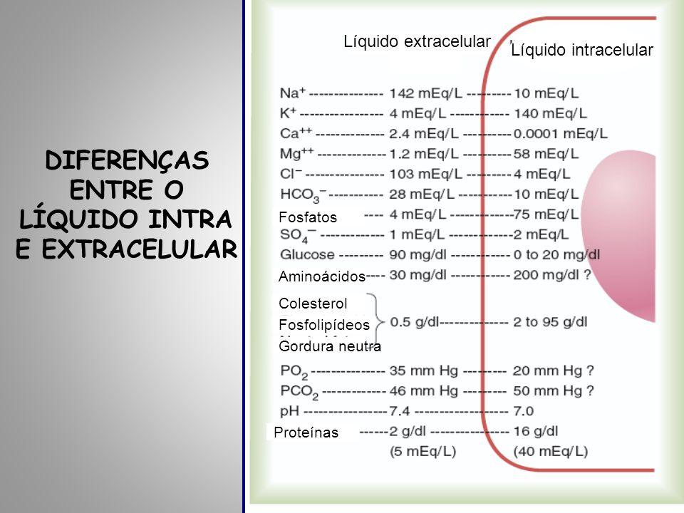 DIFERENÇAS ENTRE O LÍQUIDO INTRA E EXTRACELULAR Líquido extracelular Líquido intracelular Fosfatos Aminoácidos Colesterol Fosfolipídeos Gordura neutra