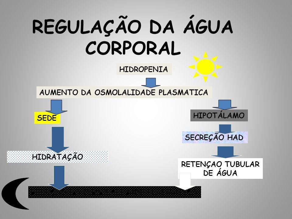 REGULAÇÃO DA ÁGUA CORPORAL HIDROPENIA AUMENTO DA OSMOLALIDADE PLASMATICA SEDE HIPOTÁLAMO SECREÇÃO HAD HIDRATAÇÃO RETENÇAO TUBULAR DE ÁGUA REDUÇÃO DA O