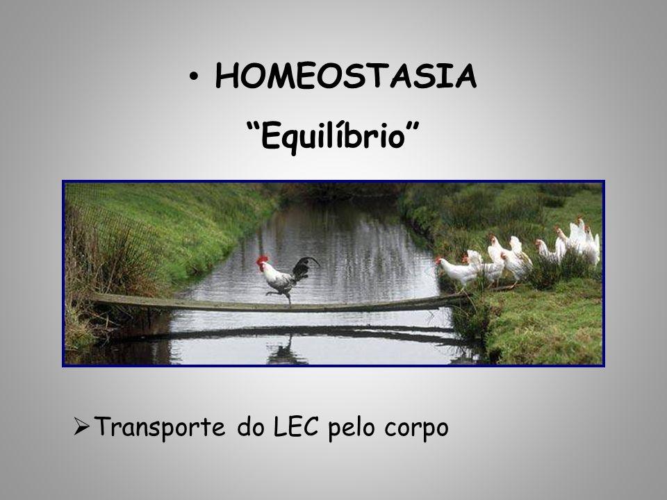 HOMEOSTASIA Equilíbrio Transporte do LEC pelo corpo
