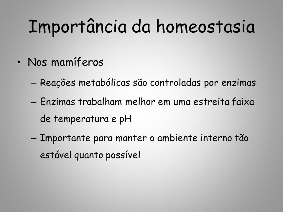 Importância da homeostasia Nos mamíferos – Reações metabólicas são controladas por enzimas – Enzimas trabalham melhor em uma estreita faixa de temperatura e pH – Importante para manter o ambiente interno tão estável quanto possível