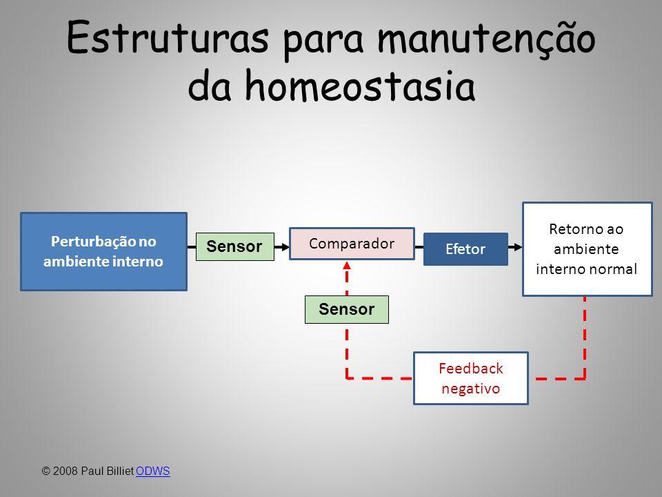 Estruturas para manutenção da homeostasia Sensor Perturbation in the internal environment Return to normal internal environment EffectorComparator Sen