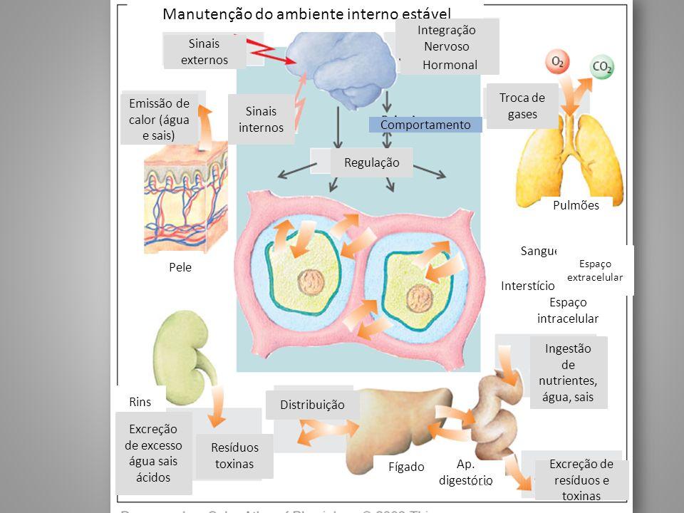 Manutenção do ambiente interno estável Sinais externos Integração Nervoso Hormonal Troca de gases Emissão de calor (água e sais) Sinais internos Compo