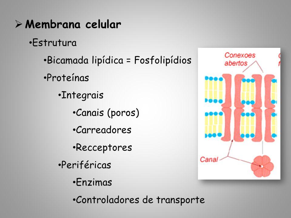 Membrana celular Estrutura Bicamada lipídica = Fosfolipídios Proteínas Integrais Canais (poros) Carreadores Recceptores Periféricas Enzimas Controladores de transporte