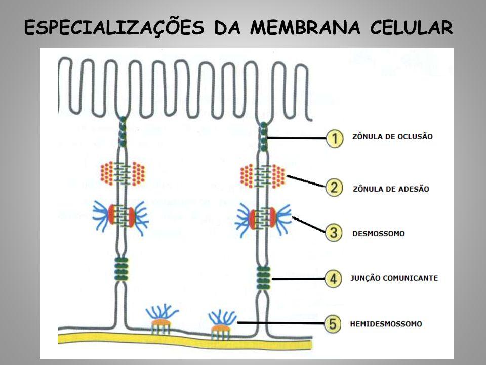 ESPECIALIZAÇÕES DA MEMBRANA CELULAR