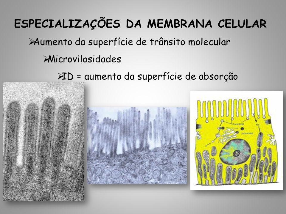 Aumento da superfície de trânsito molecular Microvilosidades ID = aumento da superfície de absorção