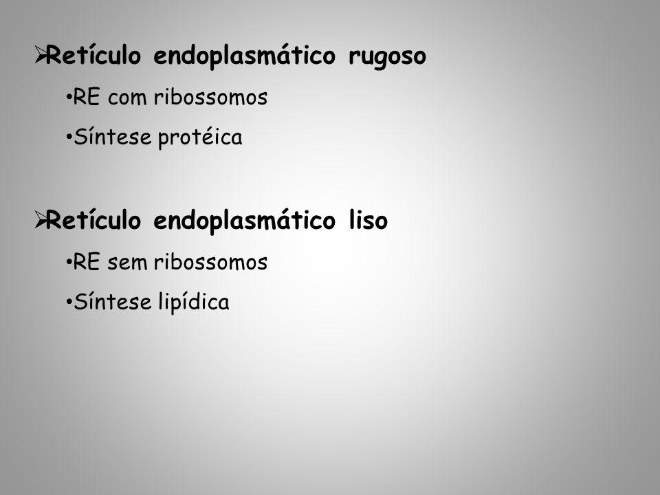 Retículo endoplasmático rugoso RE com ribossomos Síntese protéica Retículo endoplasmático liso RE sem ribossomos Síntese lipídica