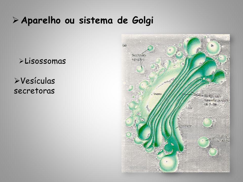 Aparelho ou sistema de Golgi L isossomas Vesículas secretoras