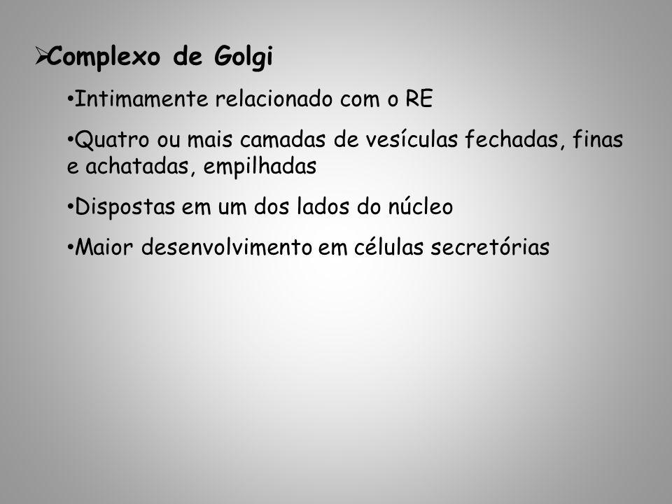 Complexo de Golgi Intimamente relacionado com o RE Quatro ou mais camadas de vesículas fechadas, finas e achatadas, empilhadas Dispostas em um dos lad