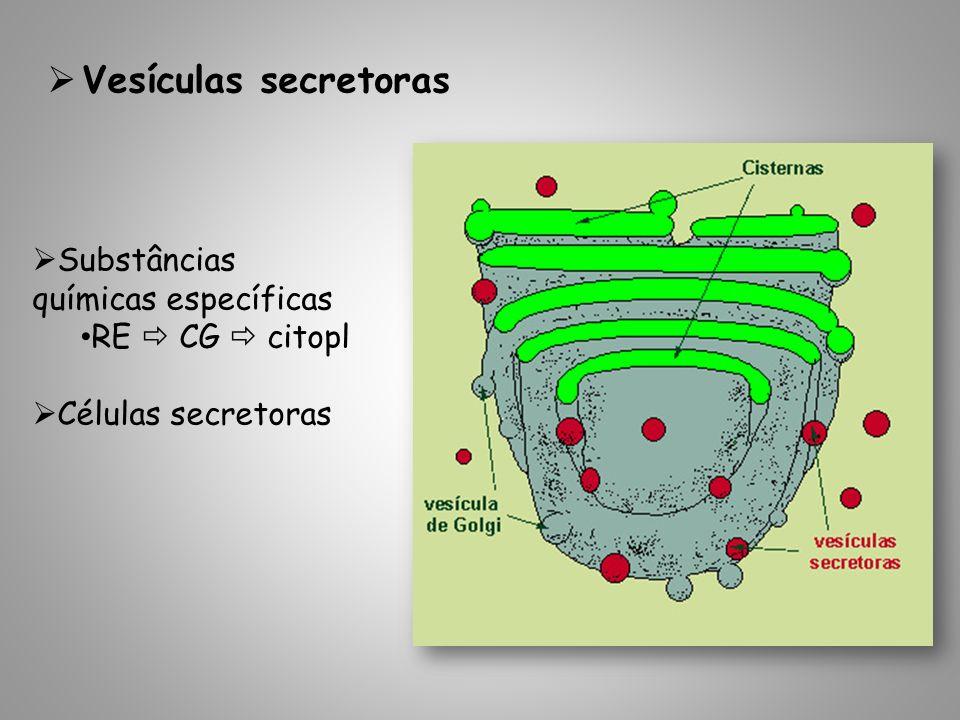 Vesículas secretoras Substâncias químicas específicas RE CG citopl Células secretoras