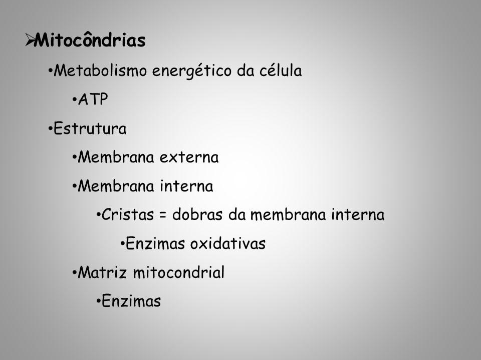 Mitocôndrias Metabolismo energético da célula ATP Estrutura Membrana externa Membrana interna Cristas = dobras da membrana interna Enzimas oxidativas Matriz mitocondrial Enzimas
