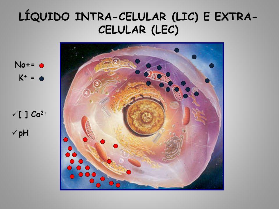 LÍQUIDO INTRA-CELULAR (LIC) E EXTRA- CELULAR (LEC) Na+= K + = [ ] Ca 2+ pH