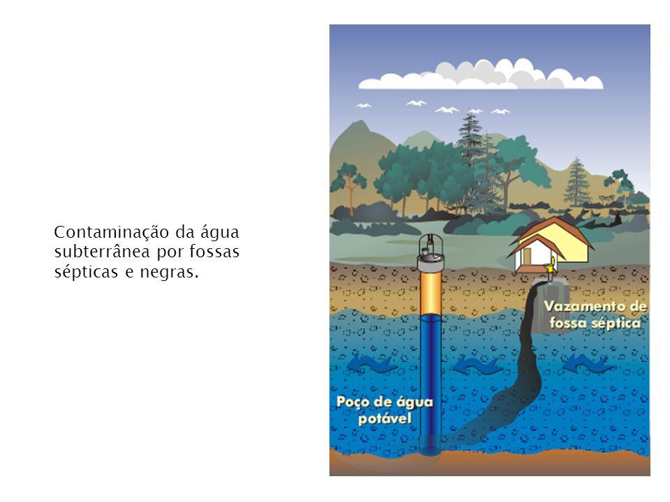 Contaminação da água subterrânea por fossas sépticas e negras.