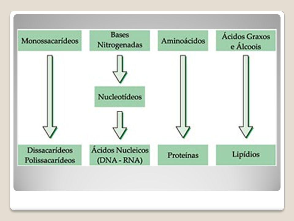 ÁGUA É o composto mais abundante no interior da célula.