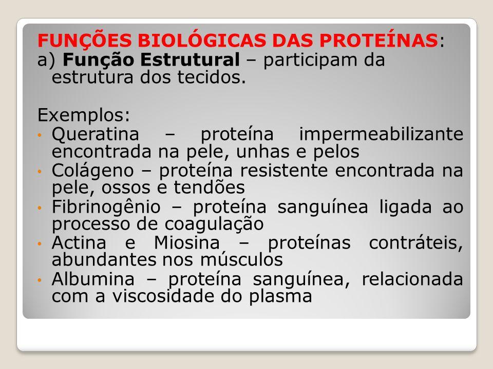 FUNÇÕES BIOLÓGICAS DAS PROTEÍNAS: a) Função Estrutural – participam da estrutura dos tecidos. Exemplos: Queratina – proteína impermeabilizante encontr
