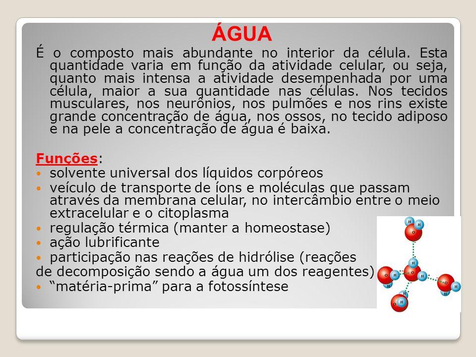 ÁGUA É o composto mais abundante no interior da célula. Esta quantidade varia em função da atividade celular, ou seja, quanto mais intensa a atividade
