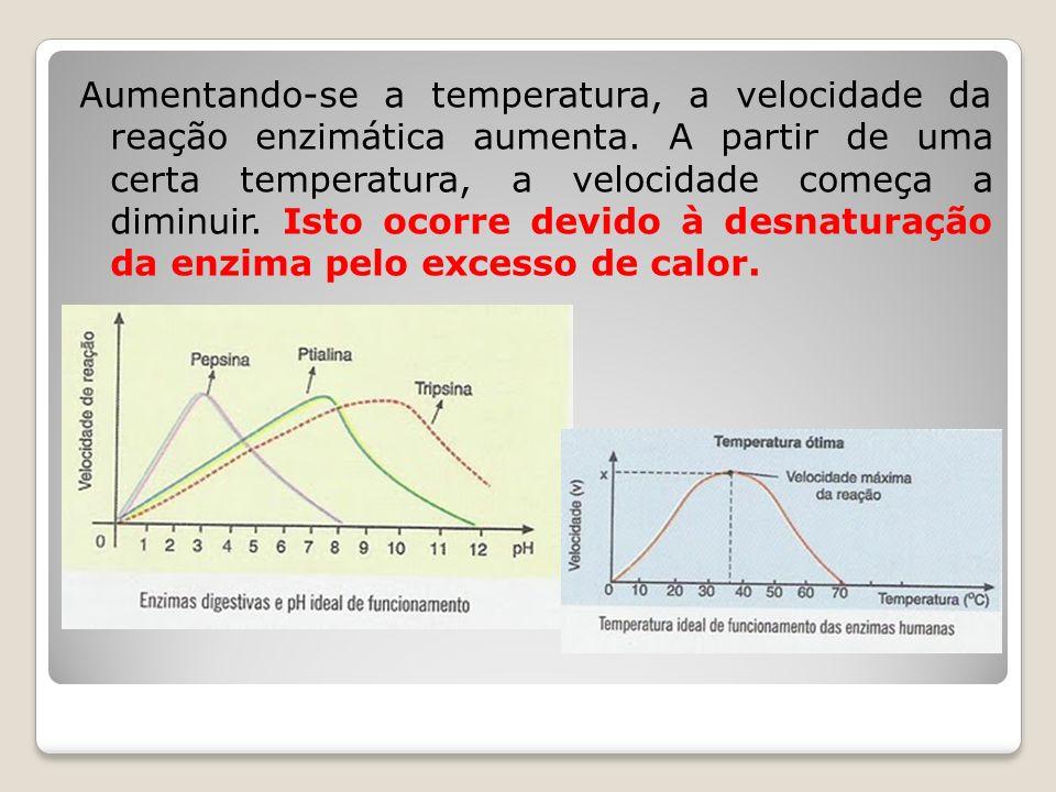 Aumentando-se a temperatura, a velocidade da reação enzimática aumenta. A partir de uma certa temperatura, a velocidade começa a diminuir. Isto ocorre