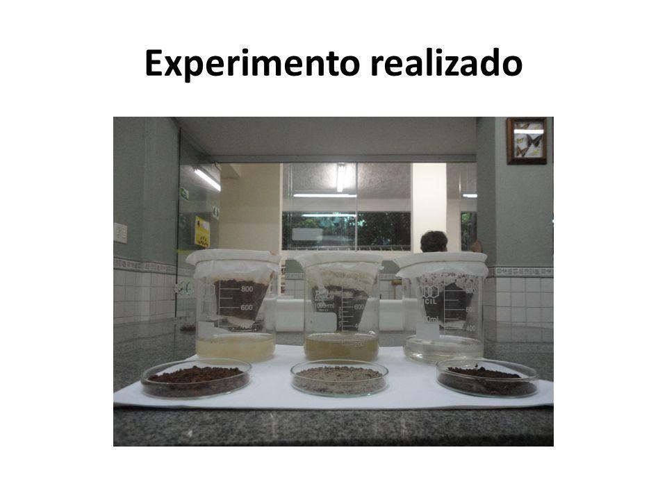 Experimento realizado