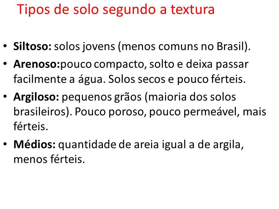 Tipos de solo segundo a textura Siltoso: solos jovens (menos comuns no Brasil). Arenoso:pouco compacto, solto e deixa passar facilmente a água. Solos