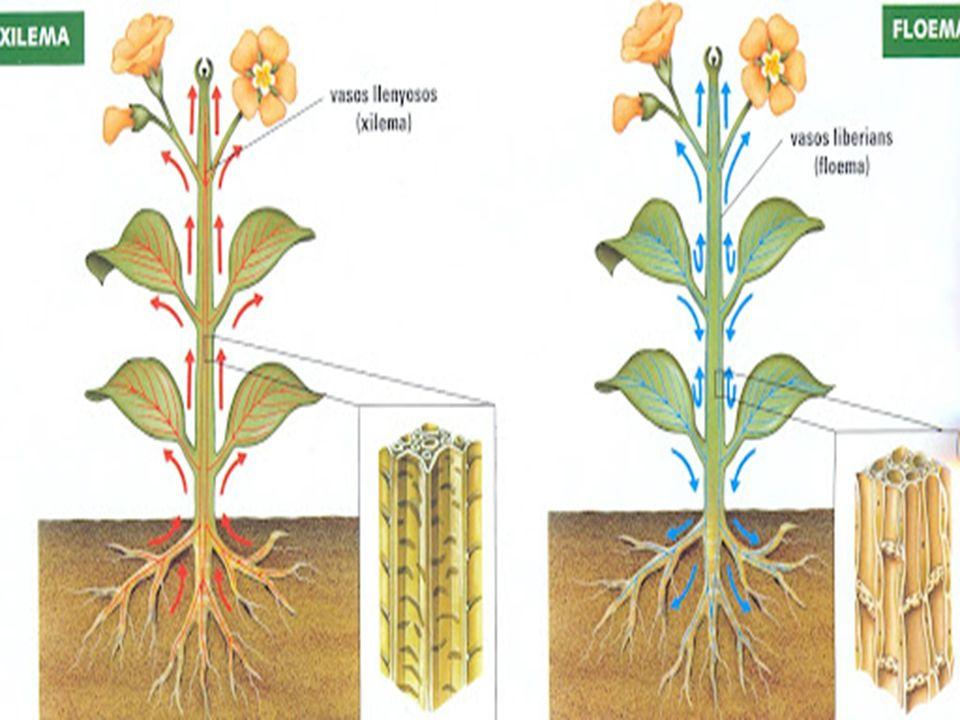 Fotossíntese / Respiração