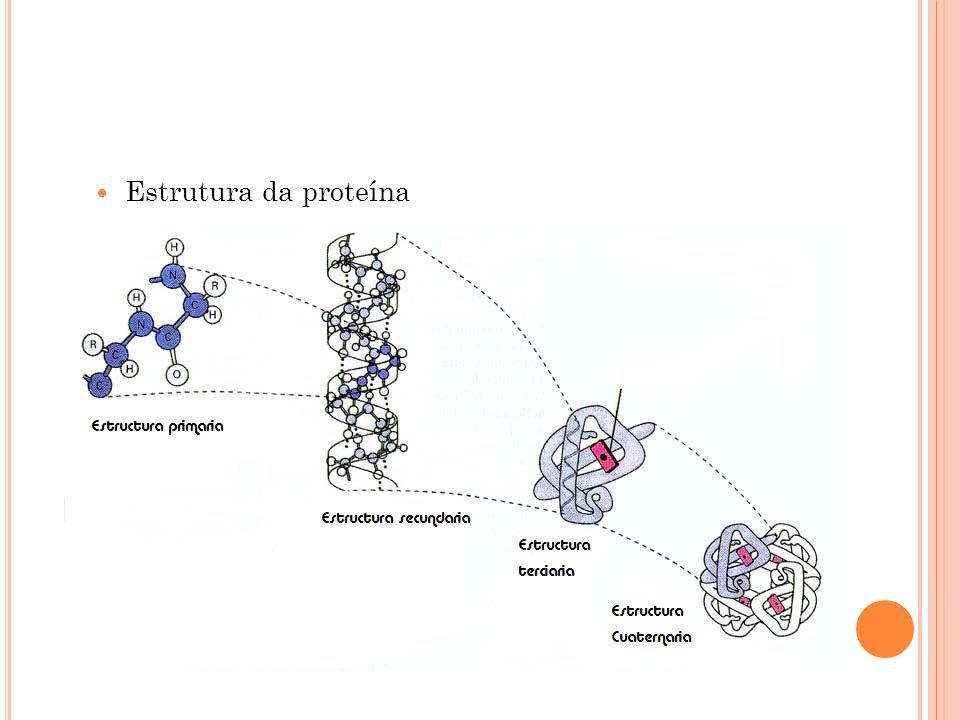 Estrutura da proteína
