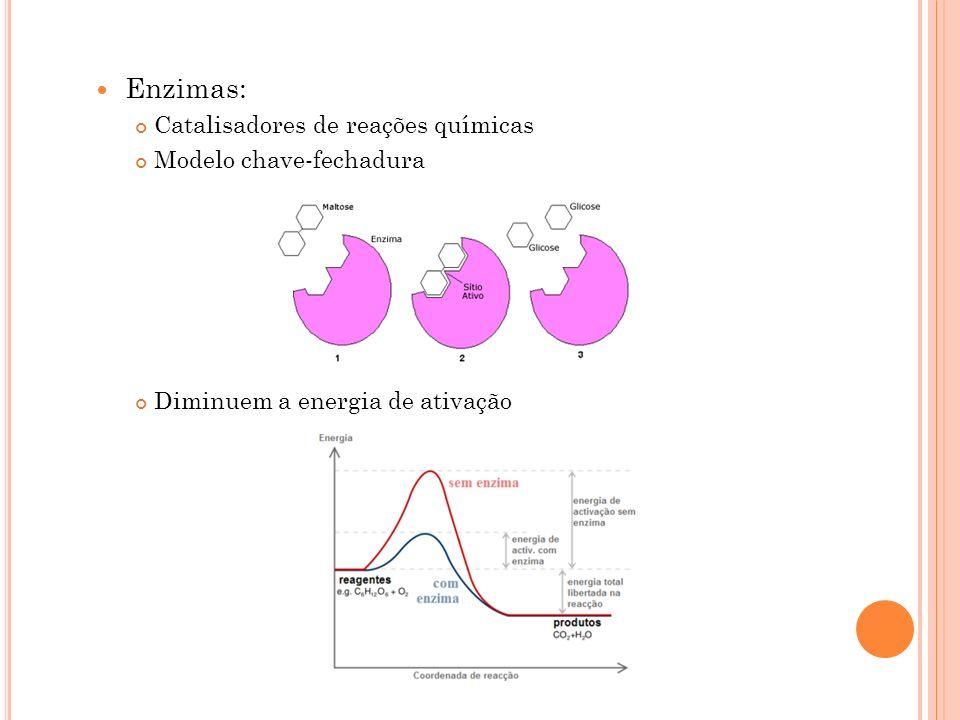 Enzimas: Catalisadores de reações químicas Modelo chave-fechadura Diminuem a energia de ativação