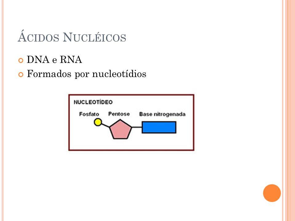 Á CIDOS N UCLÉICOS DNA e RNA Formados por nucleotídios