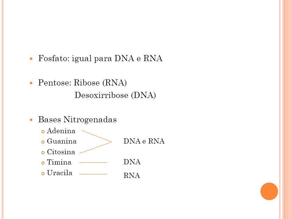 Fosfato: igual para DNA e RNA Pentose: Ribose (RNA) Desoxirribose (DNA) Bases Nitrogenadas Adenina Guanina Citosina Timina Uracila DNA e RNA DNA RNA