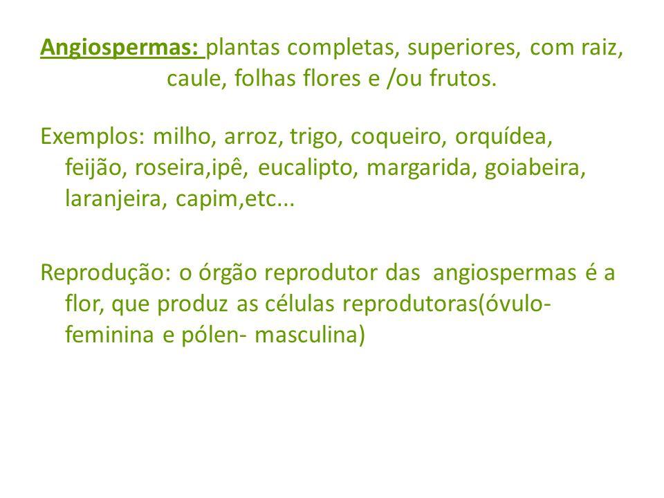 Angiospermas: plantas completas, superiores, com raiz, caule, folhas flores e /ou frutos. Exemplos: milho, arroz, trigo, coqueiro, orquídea, feijão, r