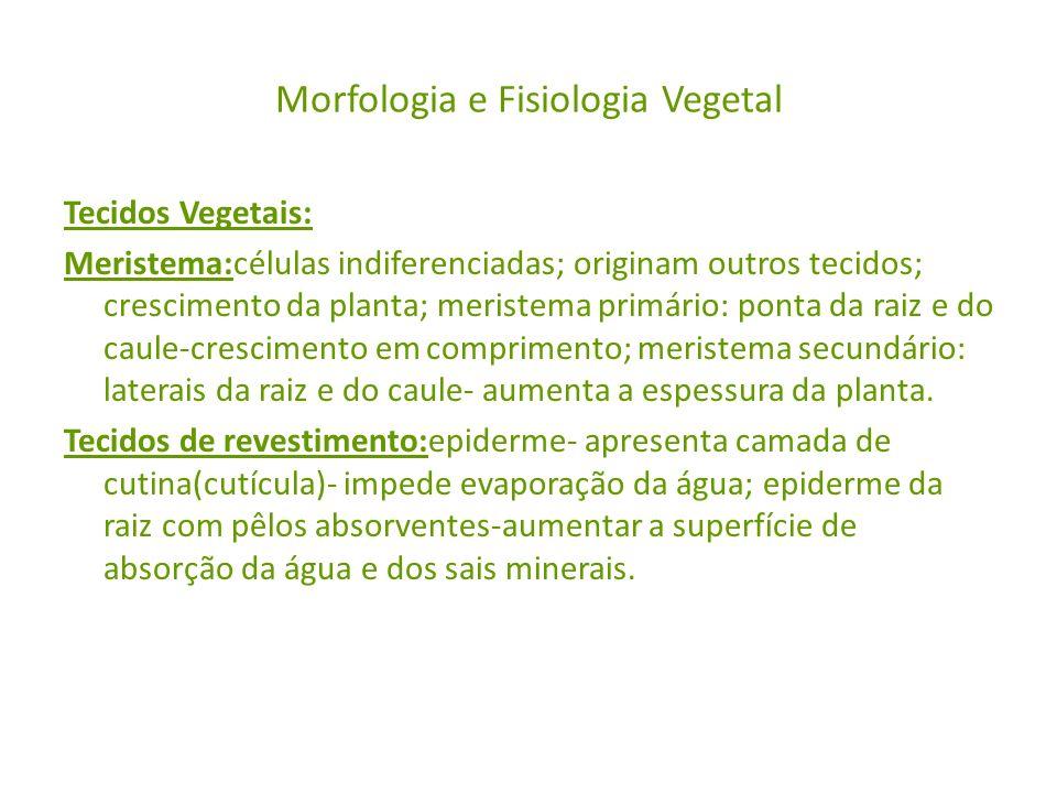 Morfologia e Fisiologia Vegetal Tecidos Vegetais: Meristema:células indiferenciadas; originam outros tecidos; crescimento da planta; meristema primári