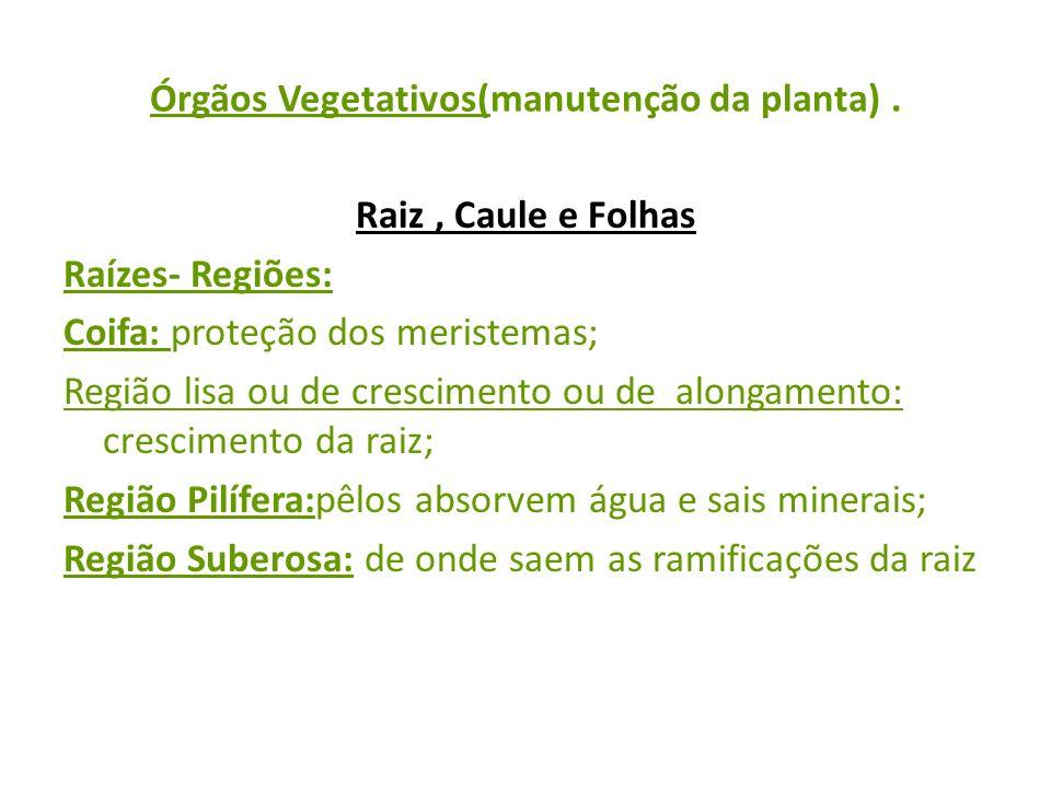 Órgãos Vegetativos(manutenção da planta). Raiz, Caule e Folhas Raízes- Regiões: Coifa: proteção dos meristemas; Região lisa ou de crescimento ou de al