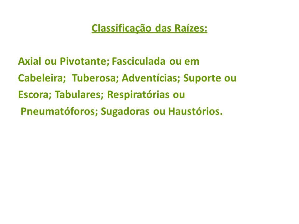 Classificação das Raízes: Axial ou Pivotante; Fasciculada ou em Cabeleira; Tuberosa; Adventícias; Suporte ou Escora; Tabulares; Respiratórias ou Pneum