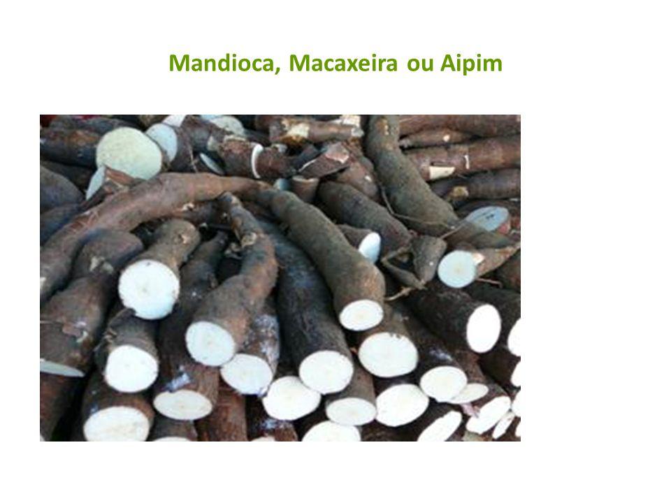 Mandioca, Macaxeira ou Aipim