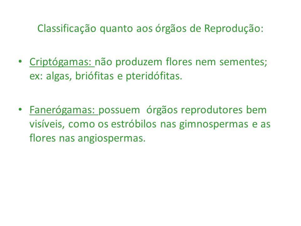 Classificação quanto aos órgãos de Reprodução: Criptógamas: não produzem flores nem sementes; ex: algas, briófitas e pteridófitas. Fanerógamas: possue