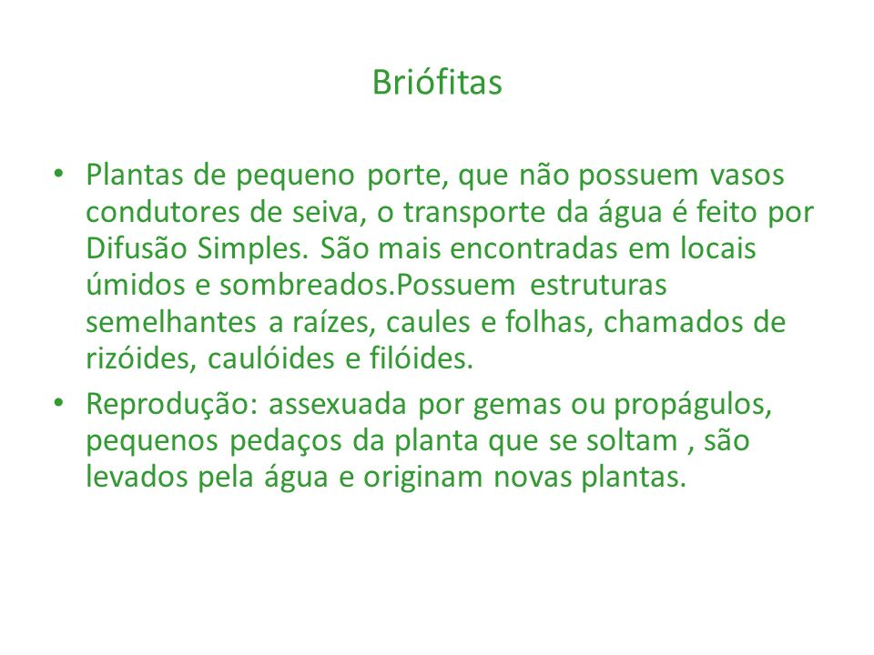 Exemplos: musgos e hepáticas.