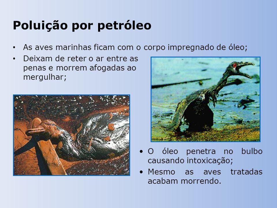 Poluição por petróleo As aves marinhas ficam com o corpo impregnado de óleo; Deixam de reter o ar entre as penas e morrem afogadas ao mergulhar; O óleo penetra no bulbo causando intoxicação; Mesmo as aves tratadas acabam morrendo.