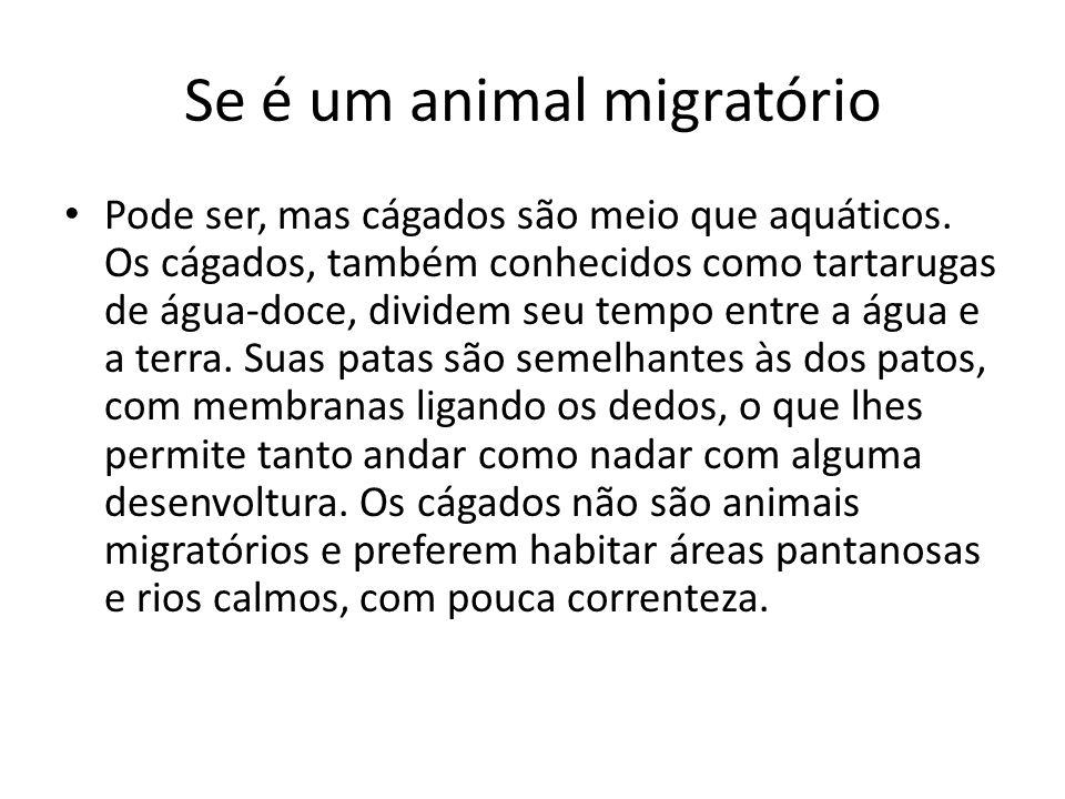 Se é um animal migratório Pode ser, mas cágados são meio que aquáticos. Os cágados, também conhecidos como tartarugas de água-doce, dividem seu tempo