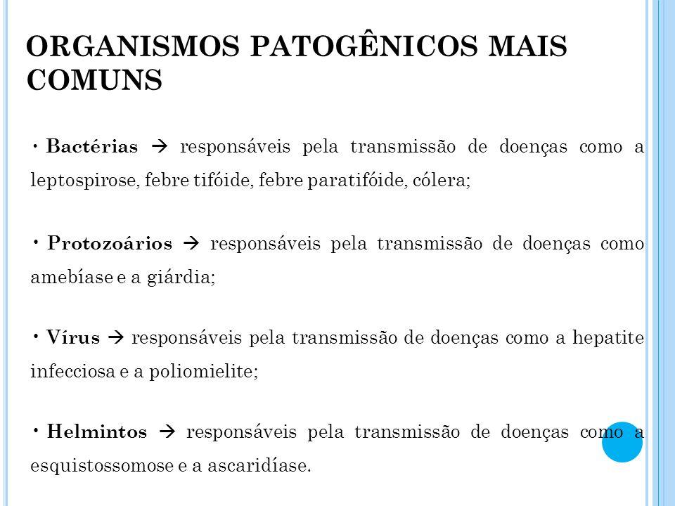 ORGANISMOS PATOGÊNICOS MAIS COMUNS Bactérias responsáveis pela transmissão de doenças como a leptospirose, febre tifóide, febre paratifóide, cólera; P