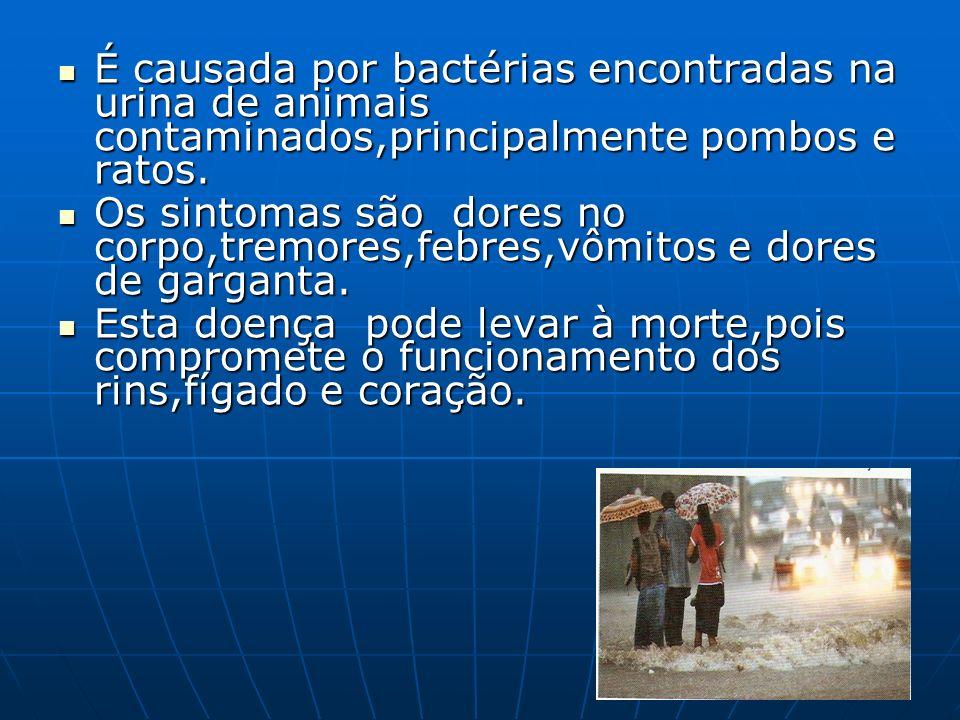 É causada por bactérias encontradas na urina de animais contaminados,principalmente pombos e ratos.