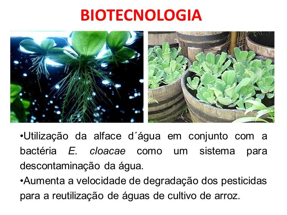 Utilização da alface d´água em conjunto com a bactéria E.