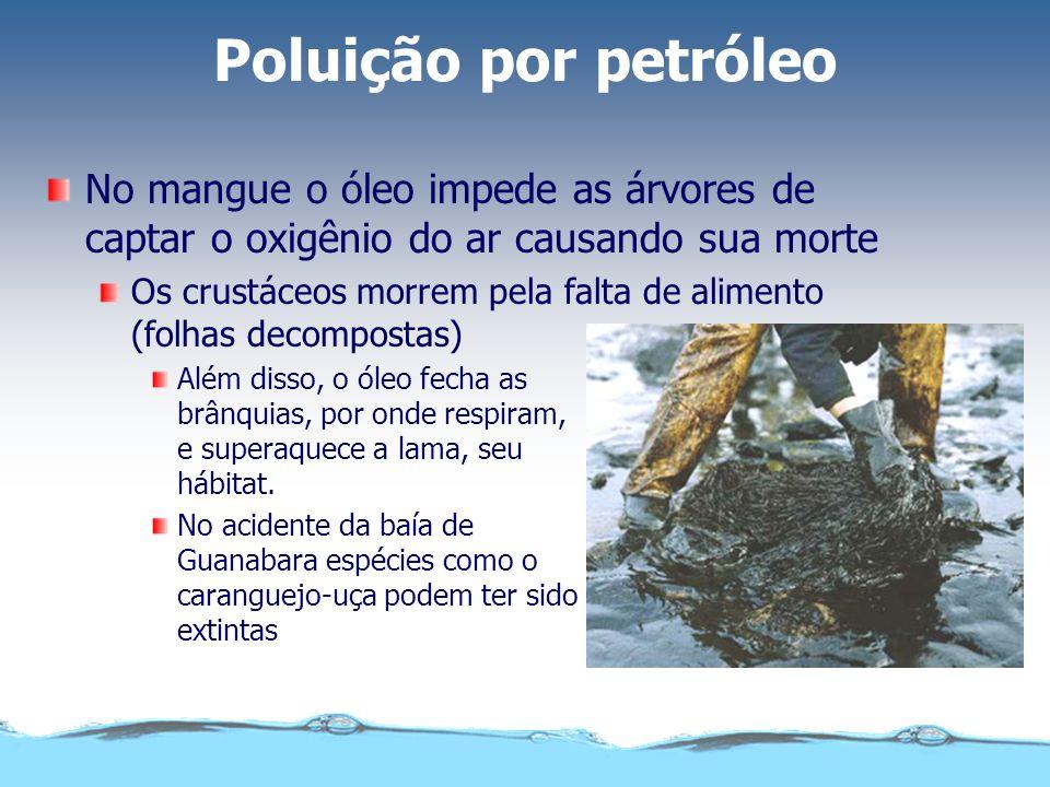 Poluição por petróleo No mangue o óleo impede as árvores de captar o oxigênio do ar causando sua morte Os crustáceos morrem pela falta de alimento (fo