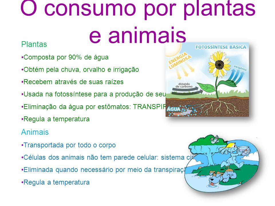 O consumo por plantas e animais Plantas Composta por 90% de água Obtém pela chuva, orvalho e irrigação Recebem através de suas raízes Usada na fotossí