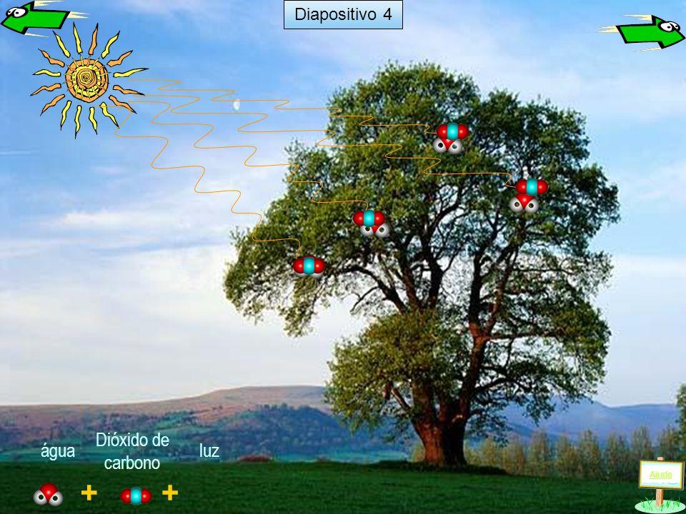 + luz + água Dióxido de carbono Ajuda Diapositivo 4