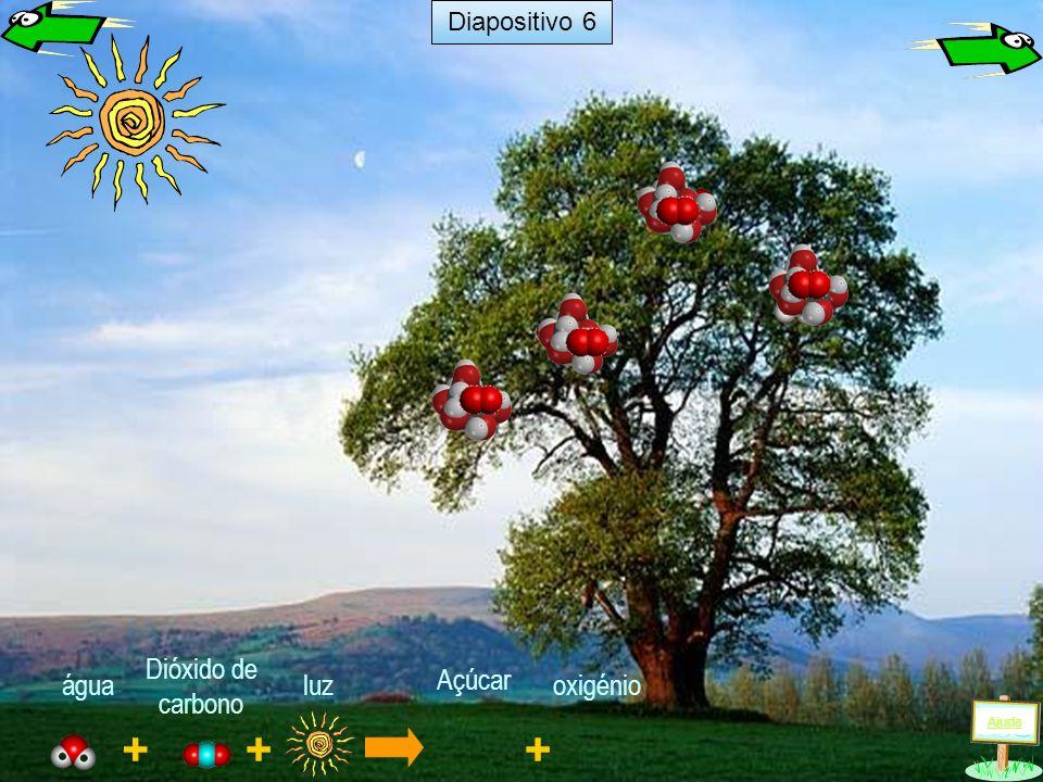 + luz + água Dióxido de carbono Ajuda Diapositivo 5