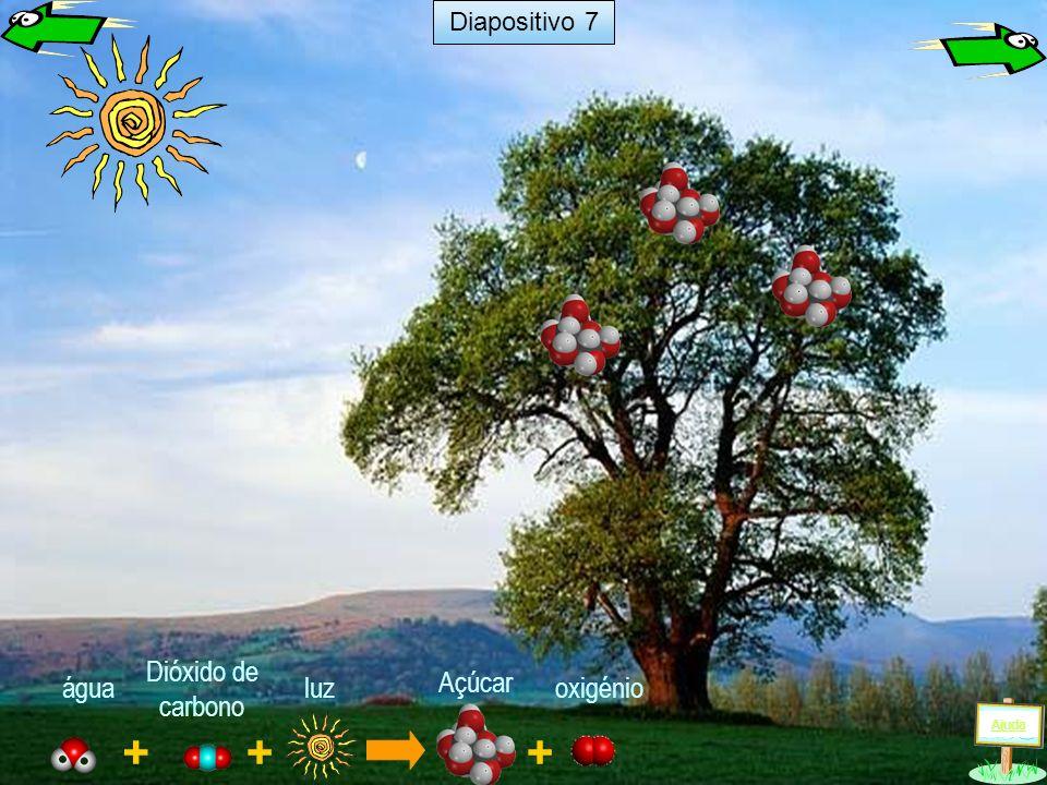 + luz + água Dióxido de carbono Açúcar + oxigénio Ajuda Diapositivo 6